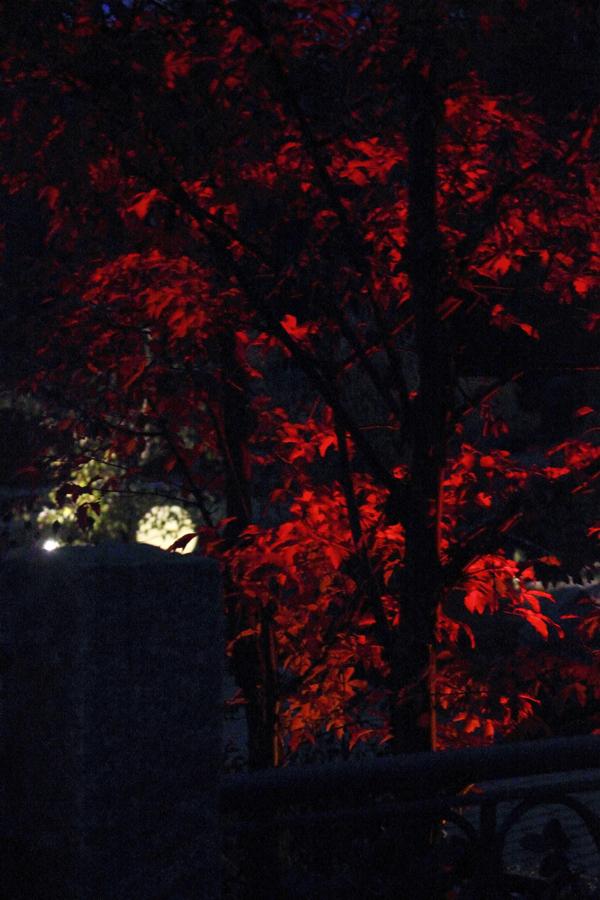 Lichtgarten Haske Bild 7