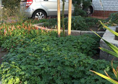 Der Garten Baro - nachher