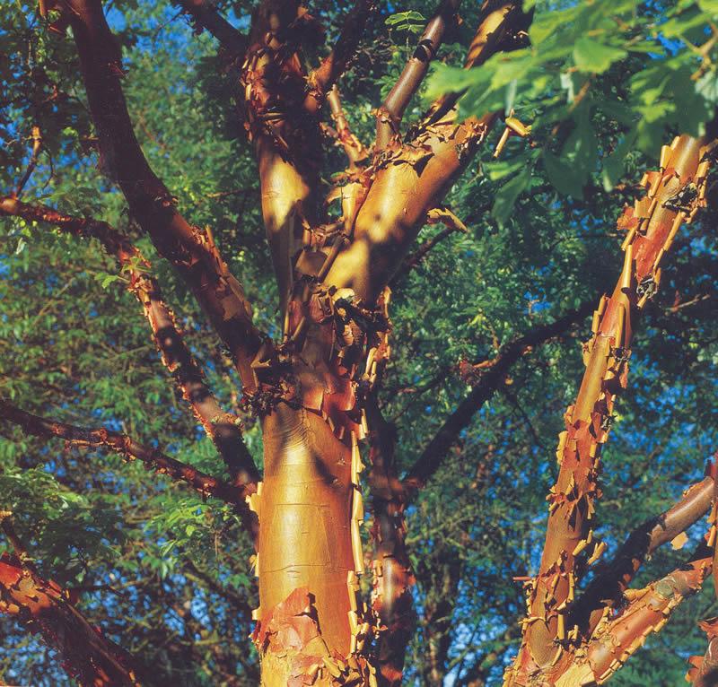 Baumpflege Haske Bild 4