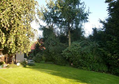 Der Garten Moors - vorher