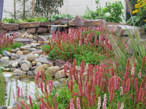 Der Garten Heine, Riede
